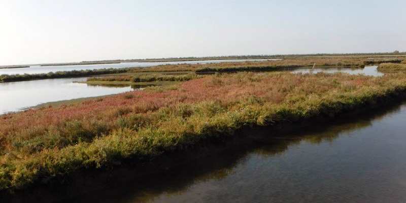Natural salt marshes