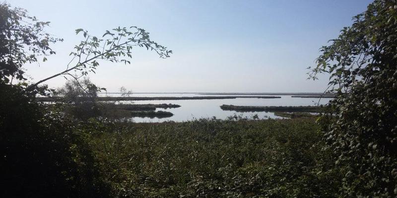 Area di progetto - Vista della laguna dall'argine del Sile